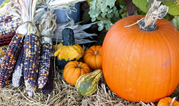 Pumpkins-and-corn-credit-Halifax-Seaport-Market.jpg